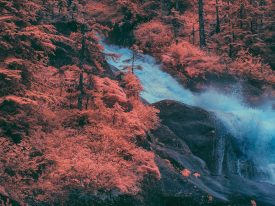 Beauty in unseen wavelengths in these infrared photographs of the Alaskan wilderness
