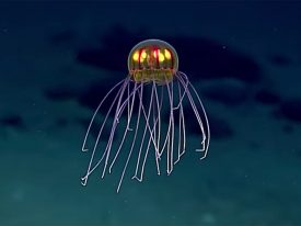 This jellyfish looks like a swimming chandelier